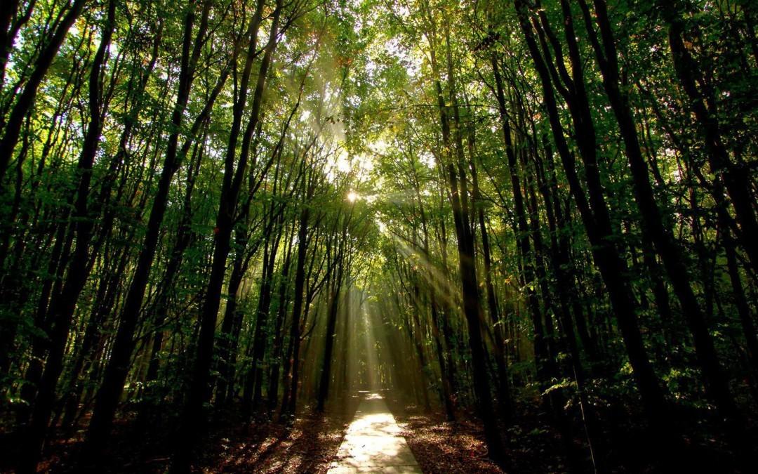 Moving Closer Toward a Sunlit Path?