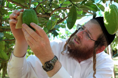 Why Some Jews are Paying $500 for an Italian Etrog