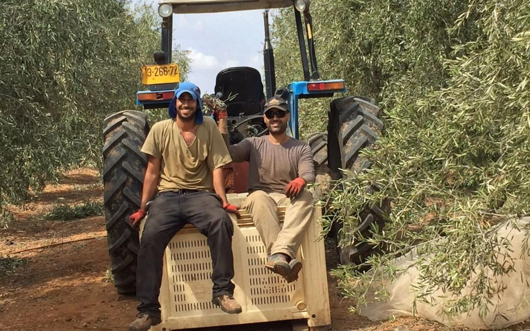 Can Medical Marijuana Revive Israel's Kibbutz Movement?
