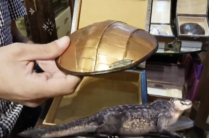 Why Israel Went Wild Over $1,000-Plus Crocodile-Skin Kippahs