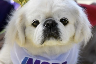 Some Doggone Fun at Baltimore Humane Society's Dogfest 2017
