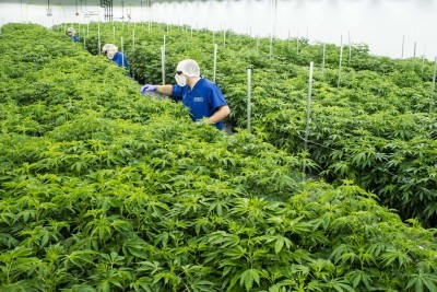 Family-Owned Cannabis Purveyor Puts Down Roots in Lutherville