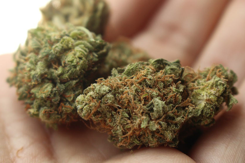 'Medical Marijuana' Following Law Enforcement Trend