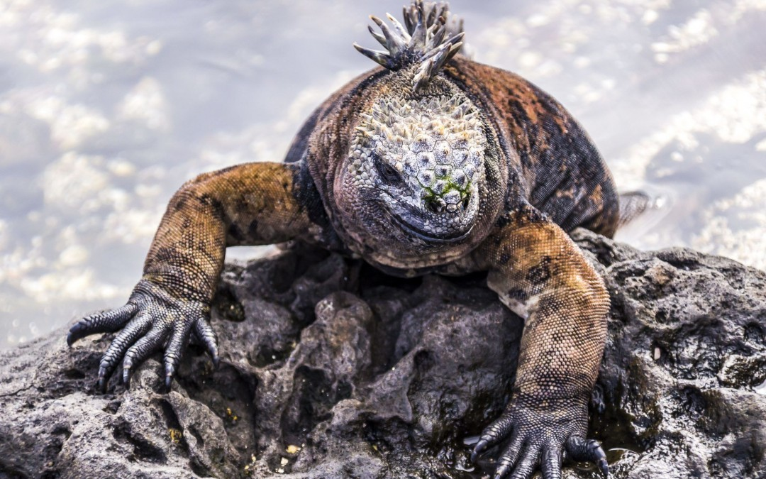 The Galapagos Islands Offer Kaleidoscope of Sights, Sounds and Experiences