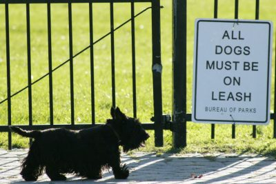 Dog Park 101