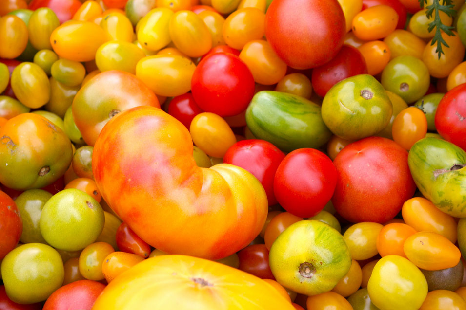 Tomatoes: A Primer