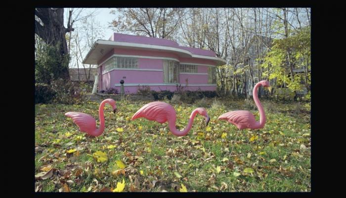 'Pink Flamingos'