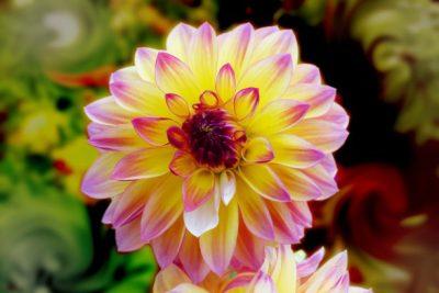 Garden Variety: Summer Bulbs Shine Brightly