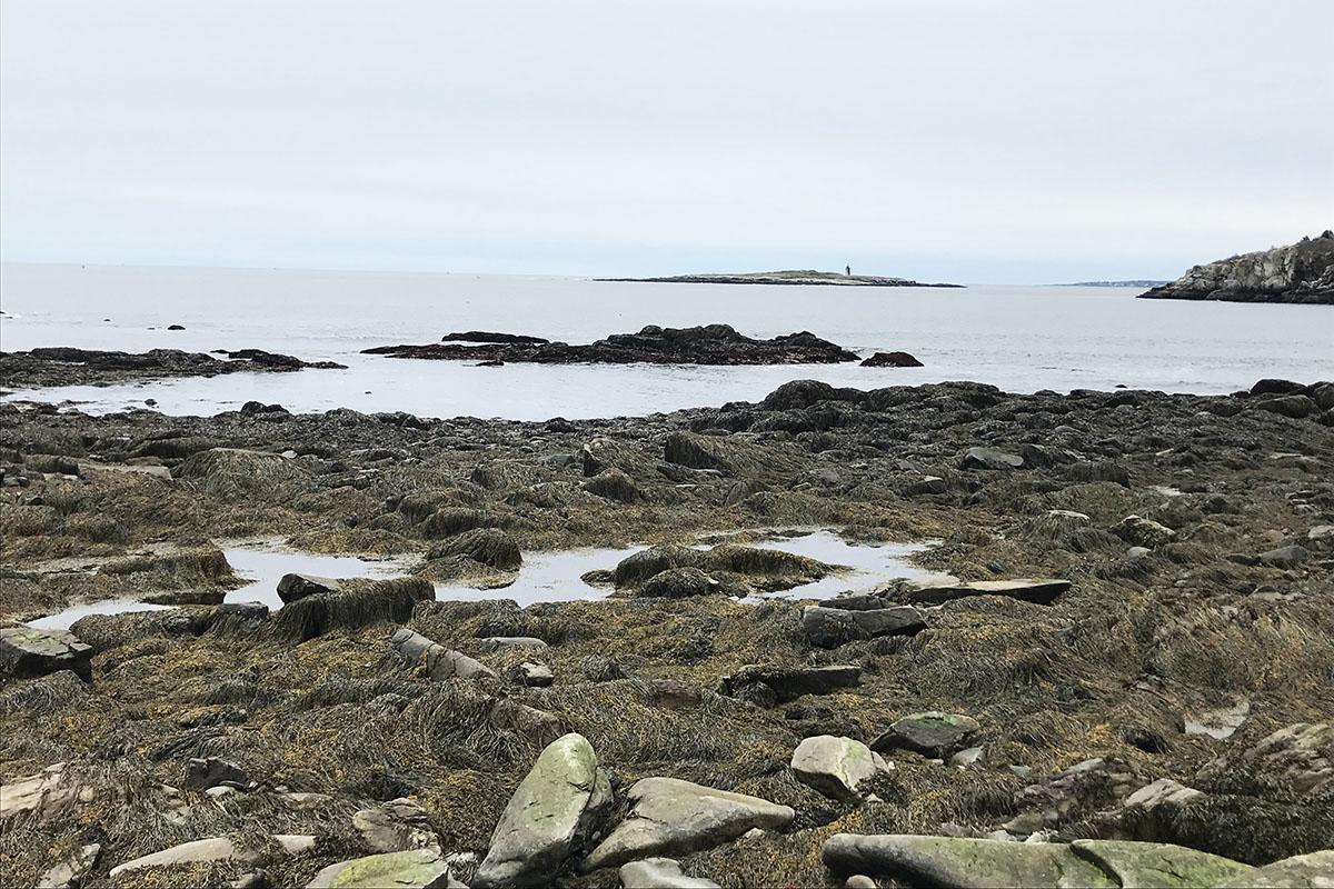 Peaks Island scenery