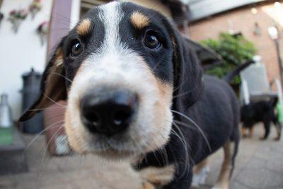Israeli Rabbinical Edict Condemns Canines as 'Forbidden'
