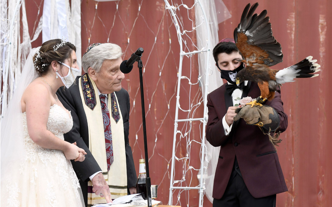 A trained hawk swoops in and delivers the wedding rings to Ryan on the bimah